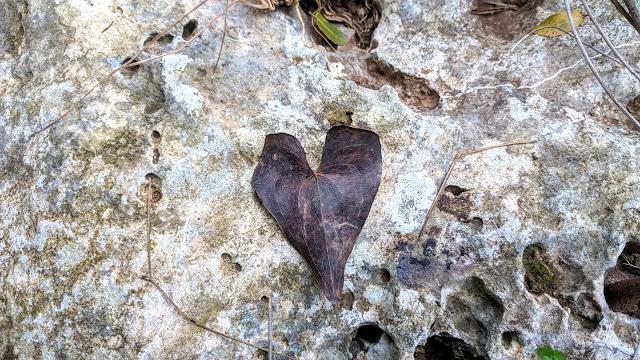 אפילו הטבע שולח סימנים לאהבה עצמית