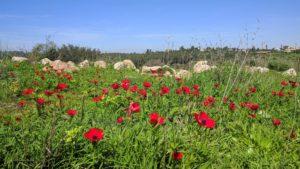 מטה יהודה - הלב הירוק