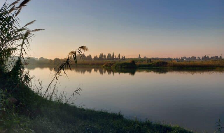 אגמון חפר תצפית בוקר על הציפורים באגם