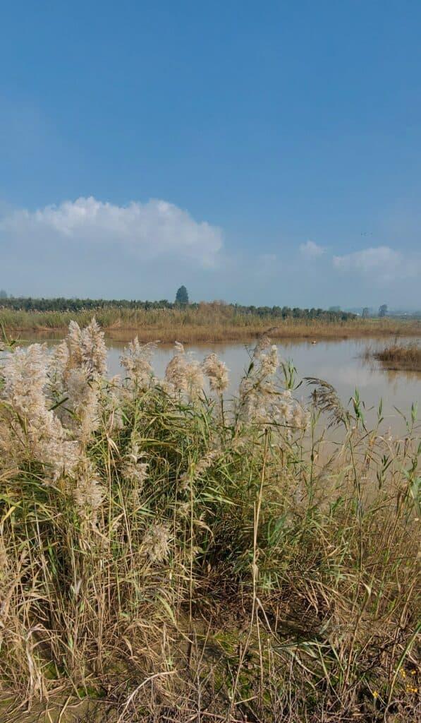 אטרקציות בעמק יזרעאל נחל בית לחם