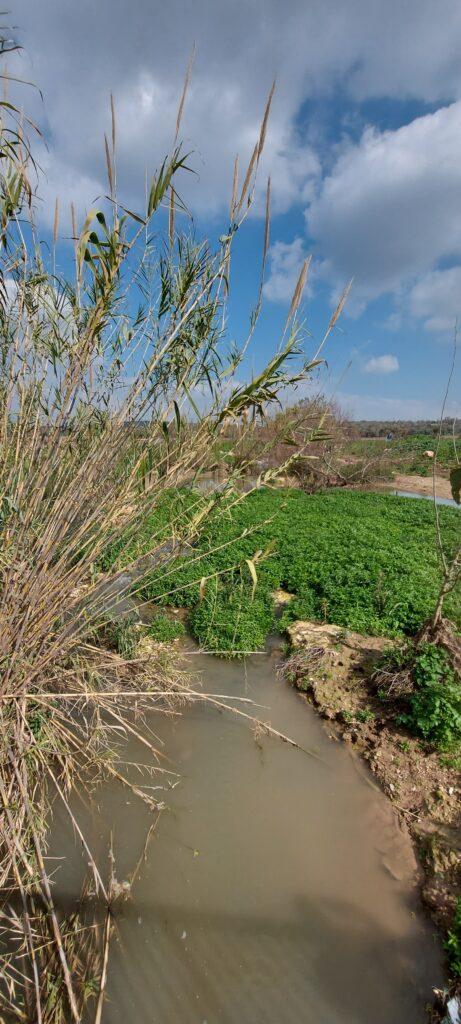 אטרקציות בעמק יזרעאל טיול בנחל ציפורי