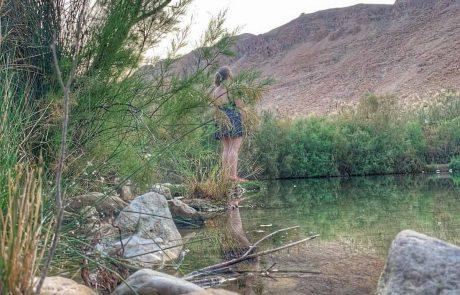 ים המלח – עיינות צוקים